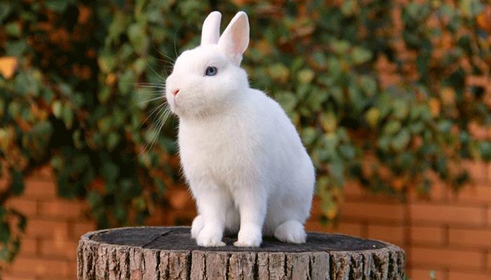 Удивительный мир карликовых кроликов