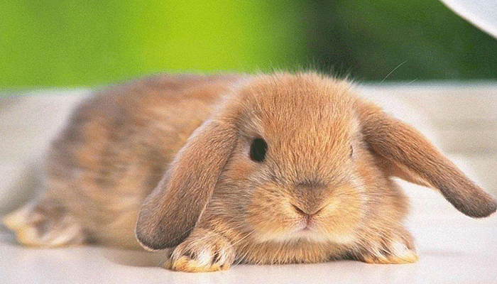 Чем пропаивать кроликов для профилактики