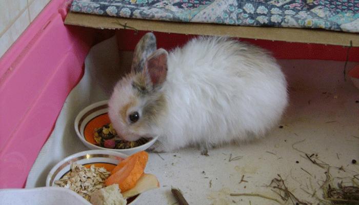 Овес в рационе кроликов: польза зерен и способы приготовления злака