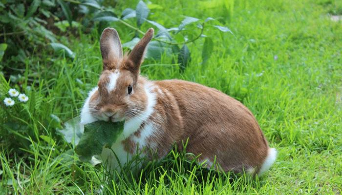 Можно ли давать камыш кроликам, как правильно и в каких количествах